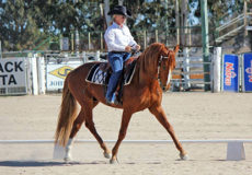 Western Dressage in the Desert 2020