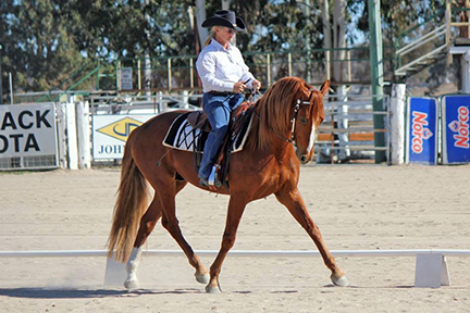 Western Dressage in the Desert Show – Day Sheets/Rider Schedule